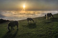 Amanece en Gorbea (Explore) (Jabi Artaraz) Tags: jabiartaraz jartaraz zb euskoflickr behorrak yeguas potros calma paz serenidad gorbea aldamin montaña amanecer sunrise