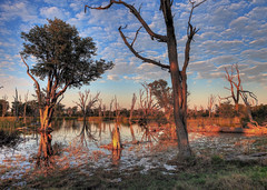 Morning, Moremi Game Reserve, Botswana, Africa (klauslang99) Tags: africa botswana brook brooks cloudless color colored colors colour day delta distant distantly environment environmental environments exterior exteriors grass grasses grassy habitat habitats horizon horizons horizontal horizontally horizontals immobile immobility moremi moreminationalpark morning nationalpark nationalparks natural nature nobody outofdoor outofdoors outdoor outdoors outside outsides peace peaceful peacefulness plant plants reflect reflected reflecting reflection reflections reflects reflexion reflexions remote remoteness river rivers seclude secluded secludes secluding seclusion stream streams trees vegetation vegetations water klaus lang