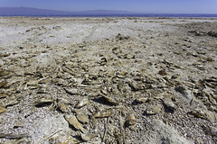 Salton Sea Fish (surfneng) Tags: beach dead fish saltoncity saltonsea
