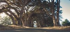 Point Reyes Tree Tunnel 1 (_donaldphung) Tags: twins peak twinspeak bixbybridge pointreyestreetunnel elcpitan pfeifferbeach