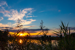 Sunset at the Horse Pond (Civilis Brutus) Tags: sunset zonsondergang riet reed grass gras water reflection reflectie wolken sluierwolken cirrus clouds cloud sky lucht landschap landscape pond kolk paardenkolk diepenveen deventer ijssel uiterwaarden forelands nikon p7800