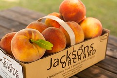 Contender--4 (Jackson's Orchard) Tags: kentucky peach orchard bowlinggreen contender bowlinggreenky jacksonsorchard