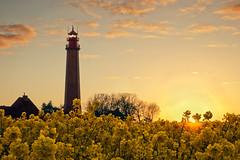 Yellow Sea (parkerbernd) Tags: light sunset sea lighthouse field yellow backlight germany lumix fantastic rape panasonic explore raps fehmarn gx1 fluegge