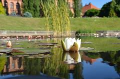 Ogród Botanyczny, Wrocław, Poland