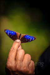 Taiwan-121113-231 (Kelly Cheng) Tags: travel color colour green tourism nature animals horizontal fauna butterfly daylight colorful asia day taiwan vivid colourful traveldestinations  northeastasia
