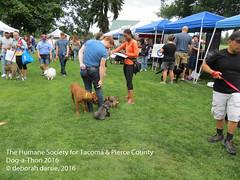 DAT2016_Crowd_1177 (greytoes_99) Tags: agility dat2015 dat2016 event humanesocietytacoma people summer tacoma tacomahs volunteers dog humananimalbond cat lakewood wa us