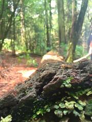Wildness (eduardodiosdado1) Tags: mushrooms tree beauty green nature wildness