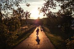 somethings never fade (ewitsoe) Tags: street trees boy sunset summer people dog sun tree grass 35mm landscape bush poland polska sunny flare ridingbike walkingdog nikond80 easternpoland wodawa eyeem ewitsoe