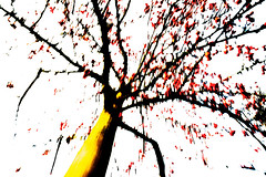 Red Berries IV (wide-angle.de) Tags: treesii de germany digital y201602
