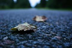Lonely (LooreEST) Tags: road summer macro yellow dead drive leaf gray dry spots fallen makro endless loodus brwn teel macroworld lehed leawes