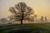 Morning mist (George Plakides) Tags: mist sheep earlymorning sunrise thebestofhdr