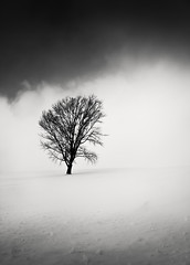 A Dream within a Dream (hiromichiendo) Tags: winter blackandwhite bw snow abstract tree art nature monochrome japan landscape still fineart silence zen nd minimalism tranquil