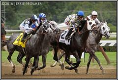 Three Greys and a Laoban (Spruceton Spook) Tags: saratoga horseracing horses creator mohaymen laoban destin jimdandy