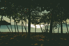 Praia da Jabaquara - Paraty (t-lamarca) Tags: praia mar sombra rvores beach sunlight tree morning