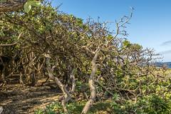 Tangle of Trees (tatlmt) Tags: southpacific tonga kingdomoftonga nukulofa tongatopu blowhole