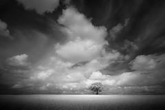 Stand (jellyfire) Tags: blackandwhite canon5dmkii distagont3518 eastanglia ir landscape landscapephotography mono suffolk ze zeissdistagont18mmf35ze canon infrared monochrome norfolk summer trees zeiss