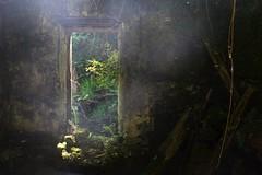 (maria.7_94) Tags: niebla asturias espaa bosque casa abandonada musgo helecho puerta