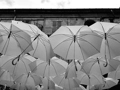 oggi piove? (tomascecco) Tags: varese lombardia italy blackwhite bianconero monocromo umbrella dalbasso lines geometry