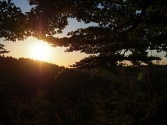 sundown, grass and tree (michaelmueller410) Tags: harz wald landschaft abend abendsonne sommer sonnenuntergang dusk evening sun sunlight trees bume forest wood