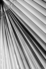 Kitchen rays.... (+Pattycake+) Tags: blinds kitchen venetian lines abstract indoor 63365 oneaday bw blackandwhite monochrome