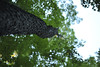 Leading Me Up (Michael Daum) Tags: nikon d700 50mmf18af seminary nature walk nxd