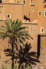 Sombra (m.mar99) Tags: africa digital paisaje viajes lugares arabe marroqui fotografia marruecos extico ouarzazate ksar encanto fotografos nikond90 kasbhas