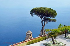 Villa Rufolo Gardens - umbrella pine and church domes 1