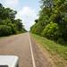 Muito verde pelo caminho