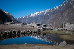 08042015-DSC_7083.jpg (seb.grd) Tags: nepal vacances np npal langtang centralregion