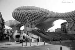 Parasol - Siviglia (filippi antonio) Tags: blackandwhite architecture monocromo sevilla spain andalucia espana parasol andalusia architettura metropol biancoenero spagna citt siviglia parasole allaperto