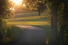 Sunset Path 157/365 (Watermarq Design) Tags: park sunset summer sun sunlight pentax path walk bugs goldenhour explored 365project