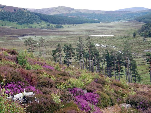 Invercauld Estate, Cairngorms National Park