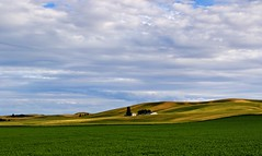 IMG_7496_we live in the valley. (lada/photo (on a road)) Tags: thepalouse greenfields greenhillsandvalleys ladaphoto stateofwashington landscape