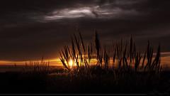Donde esta escondido ese recuerdo tan temido (Sebas Fonseca) Tags: sunset sky sun nature argentina sunshine clouds landscape buenosaires sony route 1650 a6000 sebafonseca