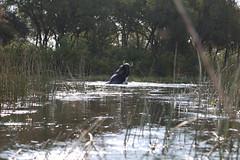 Elephant Spy Shot II (www.mattprior.co.uk) Tags: adventure adventurer journey explore experience expedition safari africa southafrica botswana zimbabwe zambia overland nature animals lion crocodile zebra buffalo camp sleep elephant giraffe leopard sunrise sunset