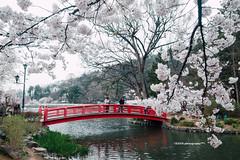 R0018272 (usagi0915) Tags:    japanricoh grd travel          japan ricoh travel