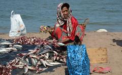 Negombo (DSC_0565) (Tartarin2009) Tags: travel sea people food fish beach blood fisherman nikon market outdoor handmade srilanka fishmarket waterscape negombo d600 lifescene tartarin2009