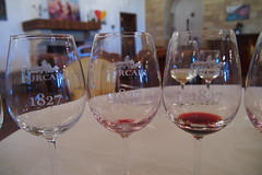 Purcari, very fine wine (mattjfleet) Tags: moldova europe travel olympus eastern