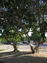 Morning on the Beach (MyFWCmedia) Tags: trees fwc myfwc myfwccom wildlife florida floridafishandwildlife conservation johnpennekamp keylargo flkeys floridakeys floridastateparks johnpennekampcoralreefstatepark park pennekamp lovefl