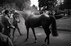 After the race (Guillaume Rougeot) Tags: auteuil konica hexar af ilford pan f plus hippodrome film analog black white nb bw noiretblanc horse race racing