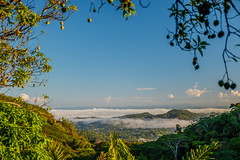 Panama-020 (s4rgon) Tags: cafeco centralamerica dschungel jungle landscape landschaft panama panamacity suburbs panamá pa