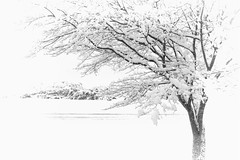 A February Morning (robinlamb1) Tags: tree snow outdoors winterscene winter whiteout snowfall