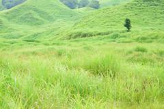 12Tonomine Highland (anglo10) Tags:   japan field