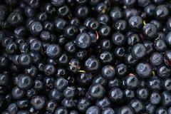 Blue blue blue superfood (liisatuulia) Tags: mustikka porkkala blueberry