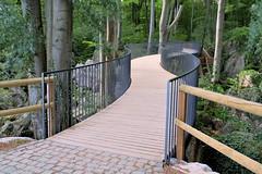 Bridge (Codos Traumreisen) Tags: gelnder brcke wald