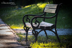 Just another street bench in Osijek (v.Haramustek) Tags: osijek croatia slavonija street brench nature park secession outdoor seat grass green metal motiv detail restingplace