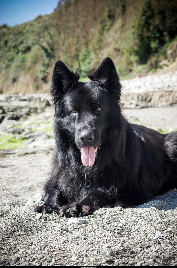 Rooneydog