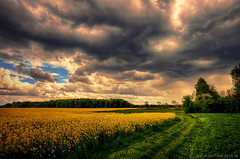 Raps..... (radonracer) Tags: field landscape landwirtschaft wolken landschaft xanten niederrhein sonsbeck