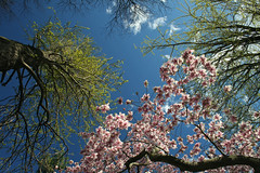 BBG (Idaliska) Tags: newyork brooklyn bbg brooklynbotanicgarden botanicalgarden