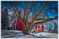 L'arbre et la maison (Siolas Photography) Tags: old house architecture qubec maison ancestry contrecoeur mpdquebec francequbec